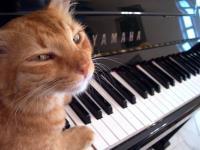 piano-cat.jpg